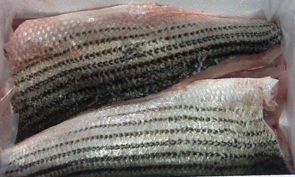 Striped Bass, Large, Fillet
