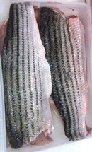 Striped Bass Small Fillet