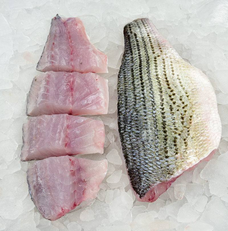 Striped Bass (Hybrid) Fillet