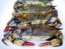 Crab Softshell Jumbo Fresh
